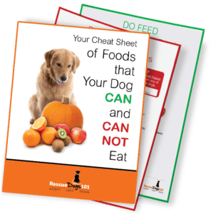 Cheat Sheet Foods Your Dog Can Not Eat