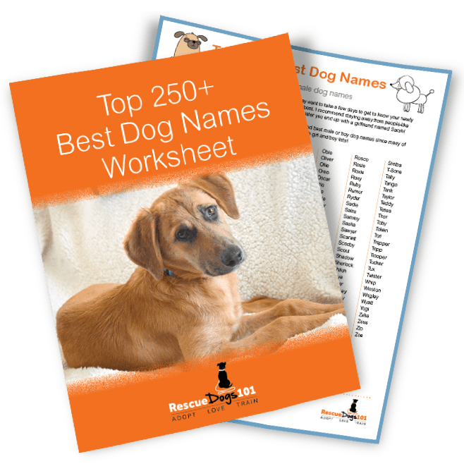Top 250 Best Dog Names
