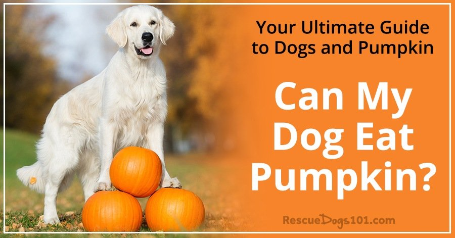 dog ate a pumpkin