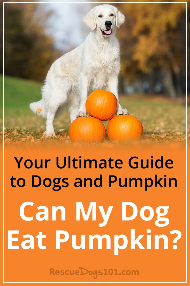 Can A Dog Eat Pumpkin Pie