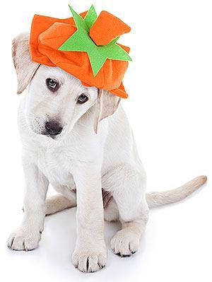 Can My Dog Eat Pumpkin