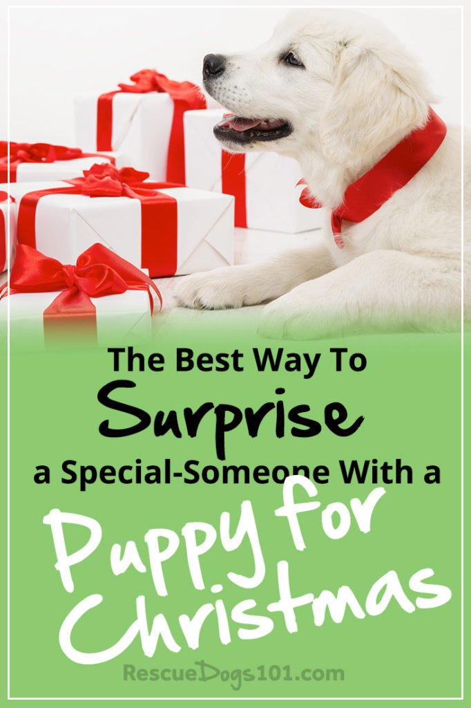 The Best Way to Surprise Someone with a Puppy for Christmas
