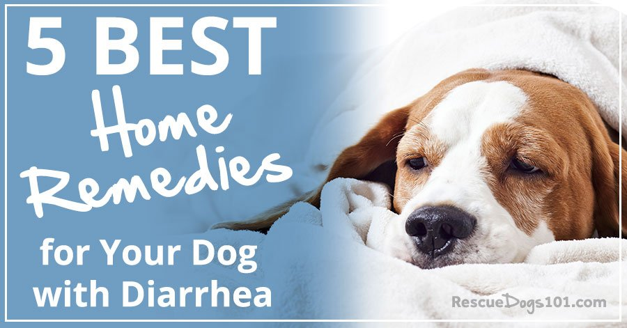 Home Remes For Your Dog With Diarrhea