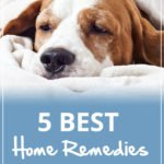 5 Best Home Remedies for Your Dog with Diarrhea