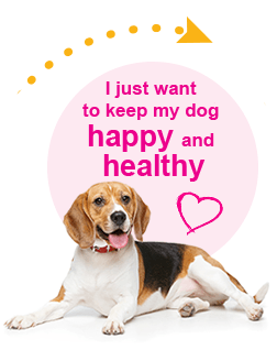 Keep dog happy and healthy