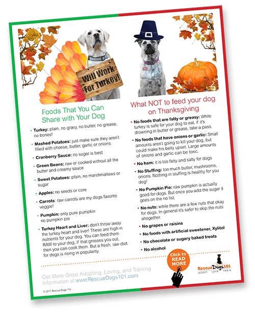 Thanksgiving Food Safety Tips for Your Dog
