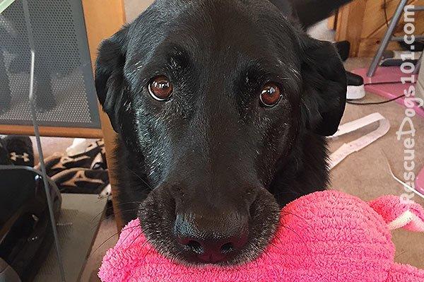 Our first Foster Dog Silla Senior Dog