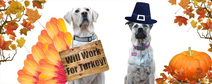 Thanksgiving Safety Tips for Dogs