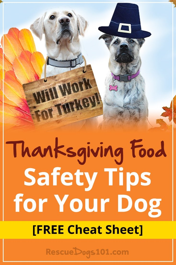 Thanksgiving food safety tips for your dog rescue dogs 101 for What do you eat on thanksgiving list