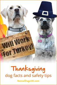 Thanksgiving dog facts and safety tips