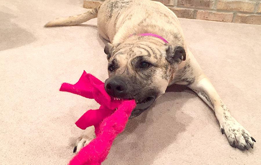Tug of Ware: fun easy indoor dog games