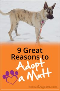 9 Reasons to Adopt a Mutt vs. a Pure Breed Dog