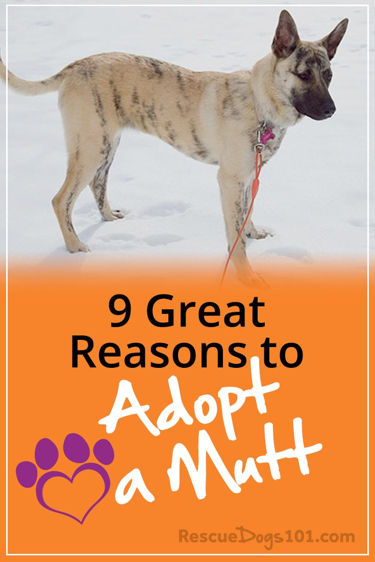 If you need a reason to Adopt a Mutt, here are 9 of them... #NationalMuttDay
