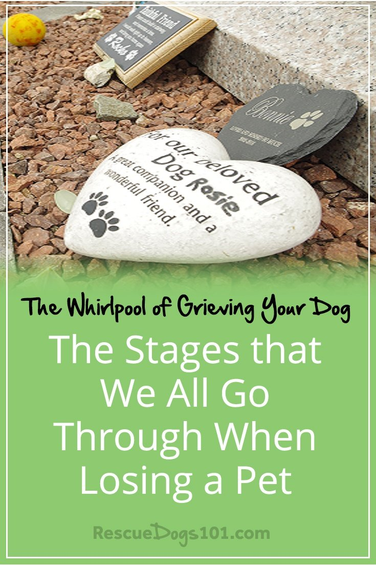 The Whirlpool of Grieving Your Dog – The Stages that We All Go Through When Losing a Pet If your pet has recently crossed the rainbow bridge, please accept my sincere condolences. My heart goes out to you. I hope you find the following article from our special guest, CPC Cares, helpful in your grieving process. #rainbowbridge #petloss #petlosssupport #petbereavement