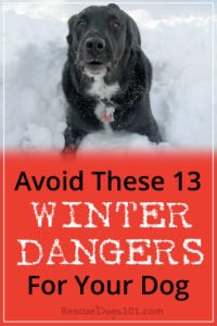 Avoid These 13 Scary Winter Dangers for Your Dog