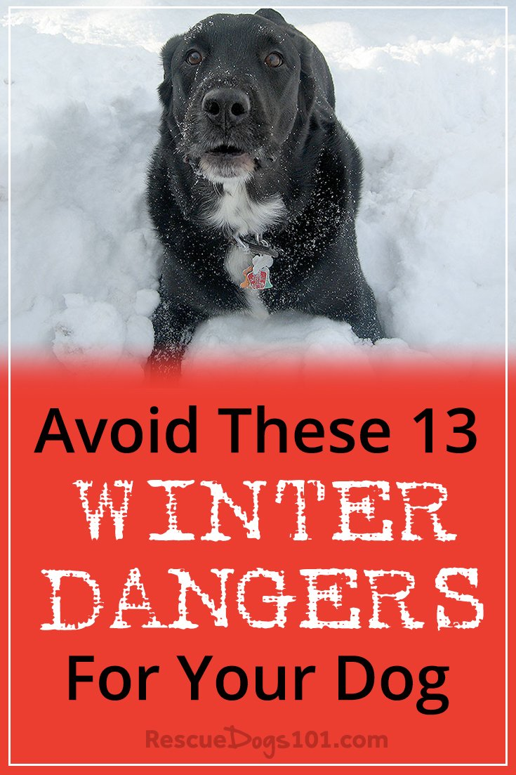 Avoid These 13 Scary Winter Dangers for Your Dog – Winter can be amazing... snowmen, sledding, hot cocoa... and your dog may love to play in the snow too! But be aware of these 13 scary winter dangers that can be deadly for your dog. These dangers are real and in the joy of the holiday season, you definitely don't want to be rushing your dog to the emergency vet. #petsafe #doggies #doglovers #dog #dogcare #doghealthtips #doghealth #doghealthwellness #dogstuff #cuteanimals #puppy #puppylove