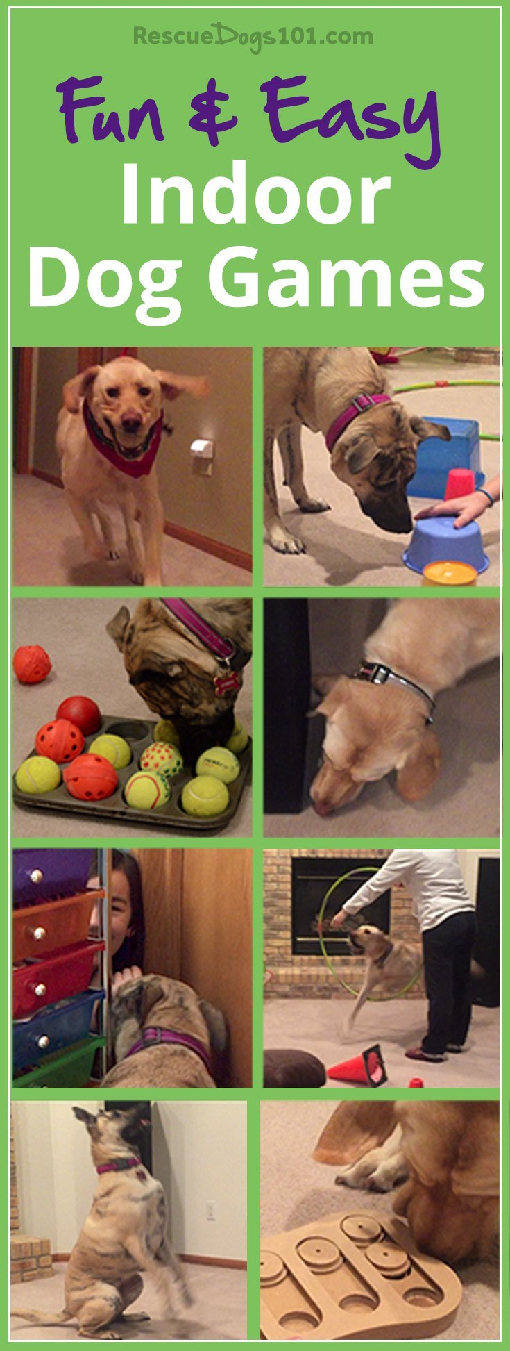 11 Fun and Easy Indoor Dog Games