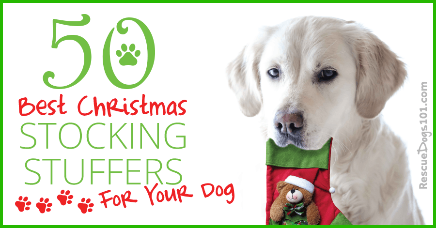 50 Best Christmas Stocking Stuffers for your Dog