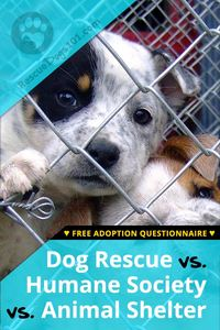 humane society vs shelter vs dog rescue dog adoption; dog health; dog training; dog shelter; humane society; dog rescue