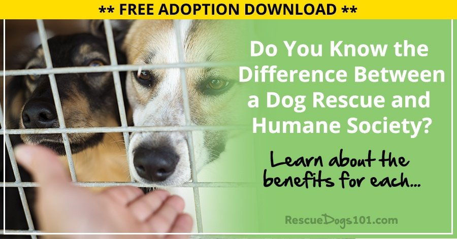 dog breeding and society essay Policies to promote socialization and welfare in dog policies to promote socialization and welfare dbe dog breeding establishment hsus humane society.