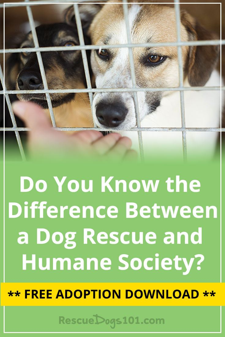If you're ready to adopt a dog, you may be searching on a animal rescue site such as PetFinder or maybe planning on heading to your local humane society.  Do you know the difference between the humane society or animal shelter vs. a dog rescue organization?  #adoptdontshop #doggies #doglovers #dog #dogadopt #dogadoption #adoptadog #dogstuff #cuteanimals #puppy #puppylove