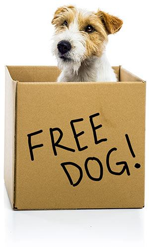 A Free dog is never free