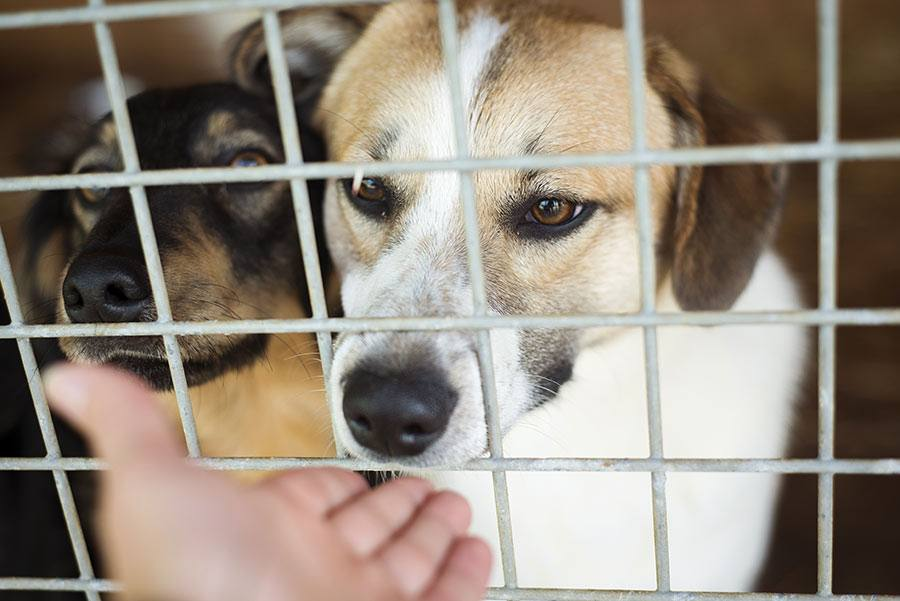 Dog Rescue and Humane Society vs. Dog Shelter