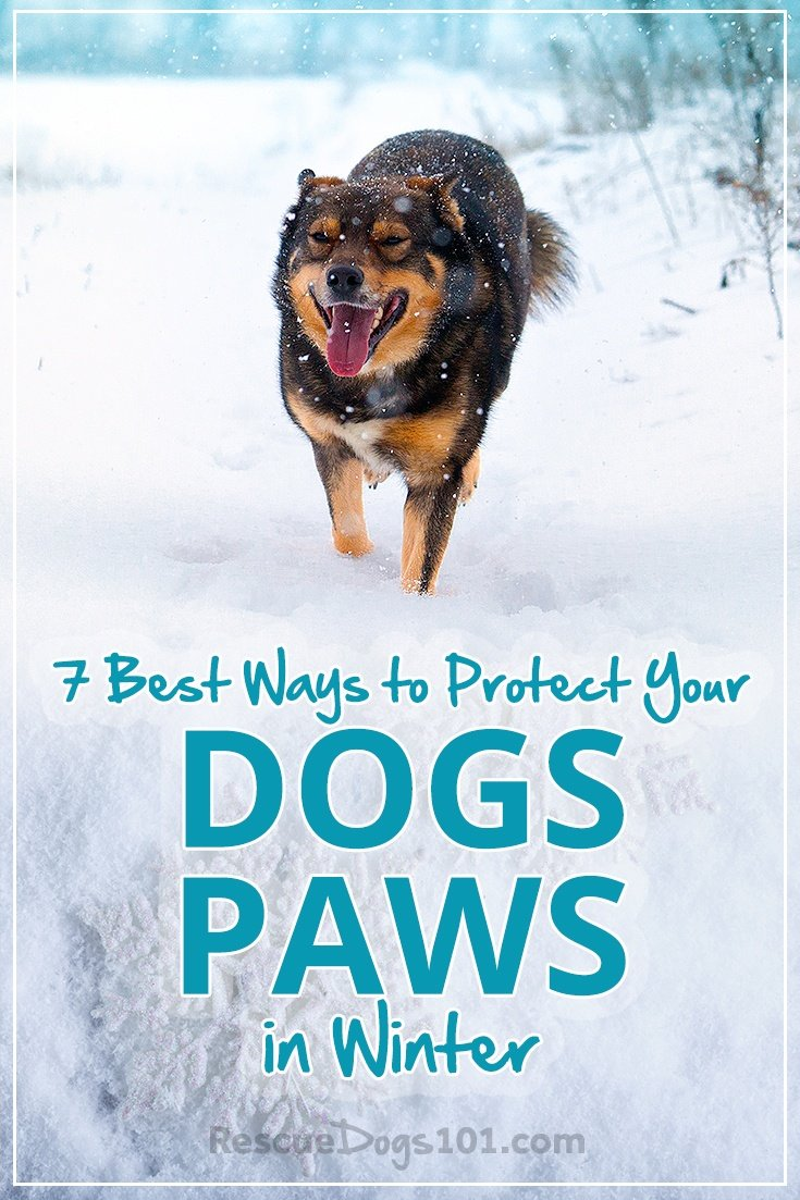 7 best ways protect dogs paws winter