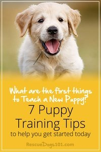 First Things I Need to Teach My New Puppy - 7 puppy training tips to help you get started today