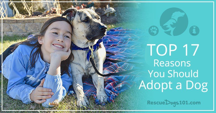 Questions To Ask If Adopting A Rescue Dog