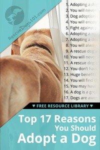 Top 17 Reasons You Should Adopt a Dog