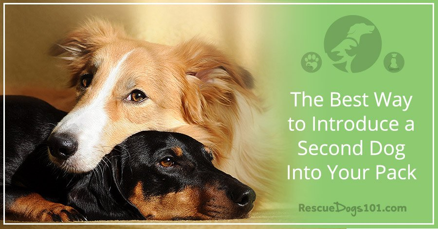 ec7fbd2775b4 best-way-introduce-second-dog-into-your-pack-slow_RescueDogs101_FB.jpg