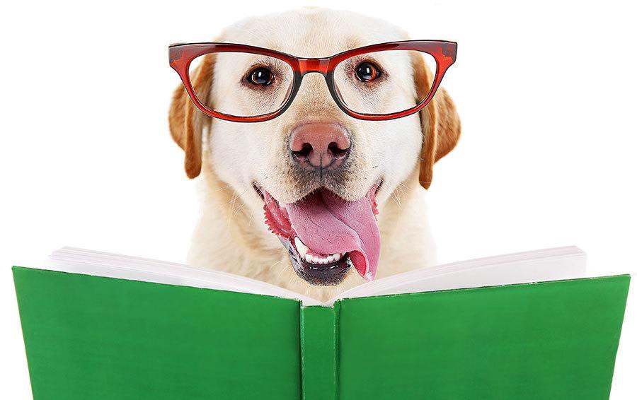 Fiction Dog Rescue Books