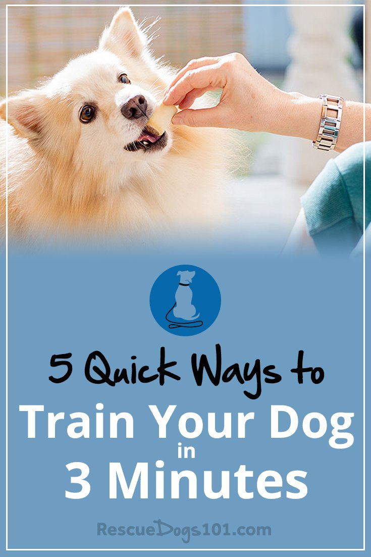 5 Quick Ways to Train Your Dog in 3 Minutes a Day – Simply take a few minutes several times a day to play and train your dog and you will be amazed on what you can accomplish. #dogtrainingtips #doggies #doglovers #dog #dogtraining  #dogadopt #dogadoption #adoptadog #dogstuff #puppytraining #puppytrainer #dogtrainer #puppy #puppylove #dogtrainingtools #rescuedogs101