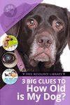 3 big clues to how old is my dog