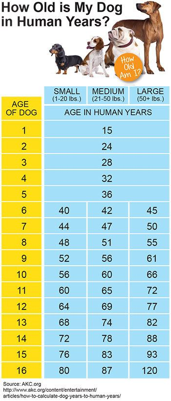 How Old is My Dog in Human Years? Dog Years Converter Chart