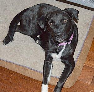 Foster Dog Maggie