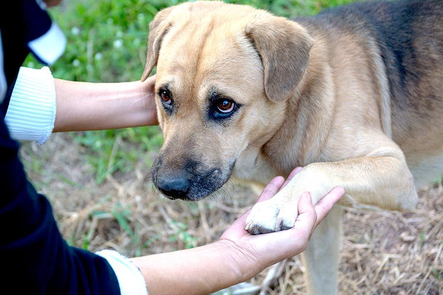 How to Temperament Test a Dog Before You Adopt - Touch and Pet the dog