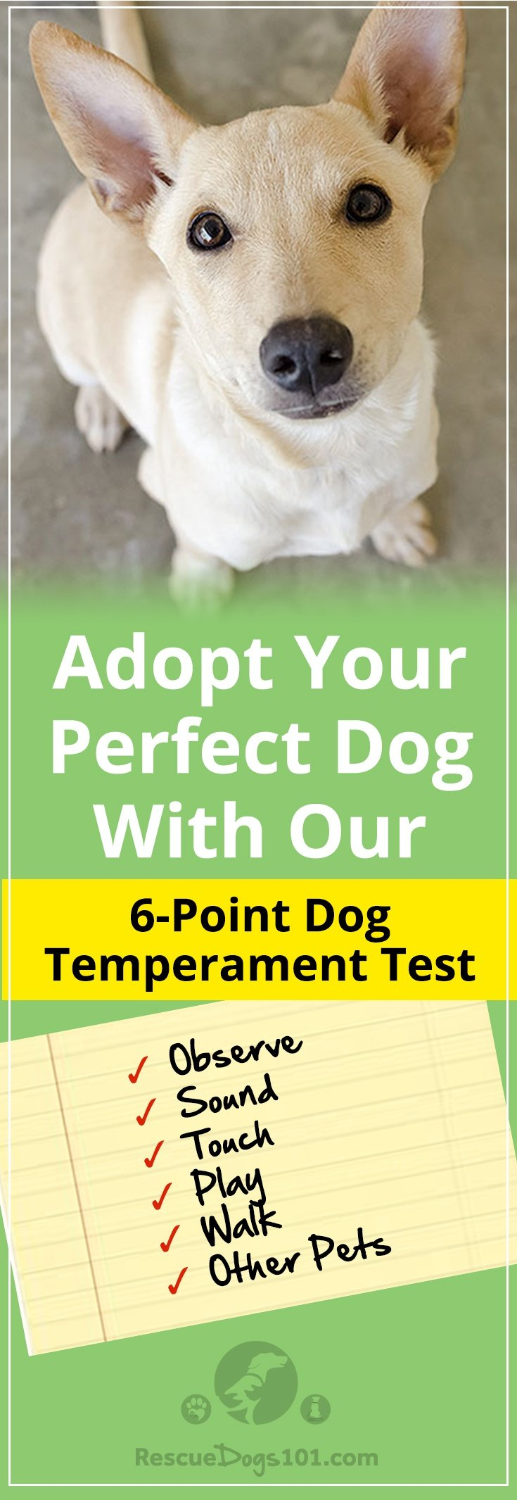 How to Temperament Test a Dog Before You Adopt – Don't judge a book by its cover, or don't judge a dog by its appearance.  Find Your Dog's Personality Type Now! #insidebeauty #adoptdontshop #doglovers #dogadoption #adoptadog #dogstuff #puppylove #rescuedogs101