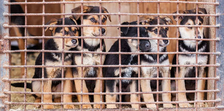 Top 15 Reasons You Should Adopt a Dog - Stop Puppy Mills