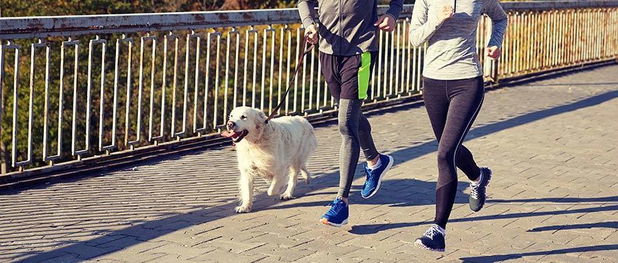 Top 15 Reasons You Should Adopt a Dog - Running Partner