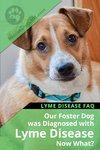 Foster Dog Has Lyme Disease FAQ