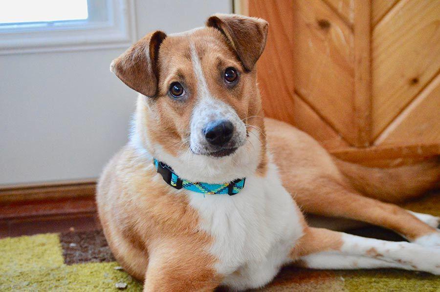 Foster Dog Has Lyme Disease