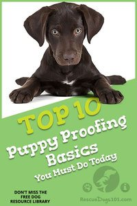 Top 10 Puppy Proofing Basics To Do Today Checklist