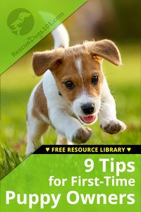 9 tips for first time puppy owners and checklist