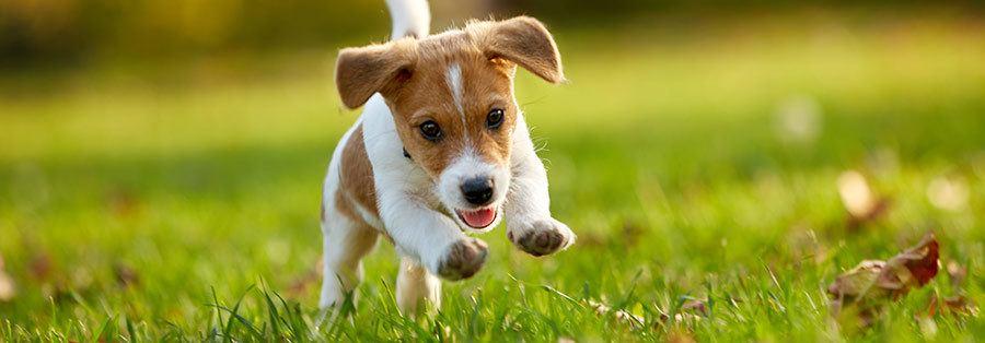 first time puppy owner checklist