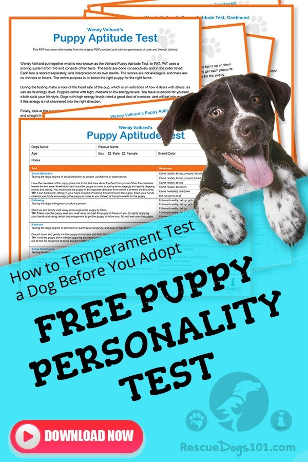 Free Puppy Aptitude Test