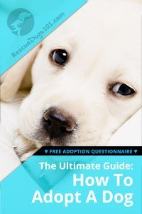 The Ultimate Guide on How To Adopt A Dog