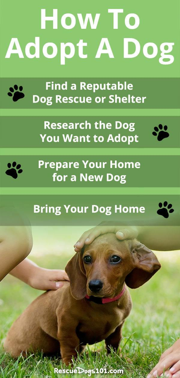 Do you want to adopt a dog but worried about finding a dog that is the right match for your family? Worried about the dog being good with kids? Will the dog have behavior issues? Follow these four quick tips on how to adopt a dog and you will be on your way to adopting the dog of your dreams...