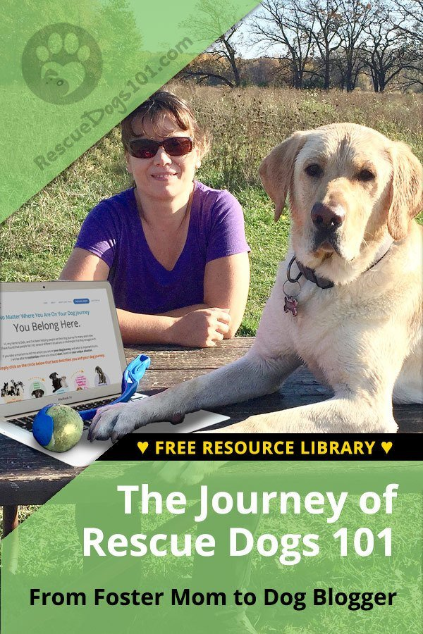 The Journey of Rescue Dogs 101 - When my family and I decided to start fostering dogs in 2014, I never imagined how drastically it would change our lives. Walk with me through my journey of the Rescue Dogs 101 Blog... #sponsored #dogblogger #dog #dogstuff #blog #blogger #dogfostermom